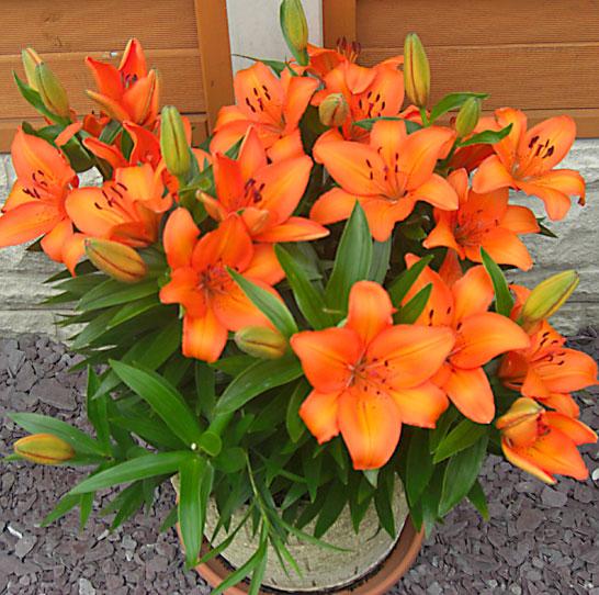 L'anno successivo, dopo essere stati nutriti con Flower Power – giugno 2010